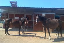 Wafer e Chiardiluna in dolce attesa