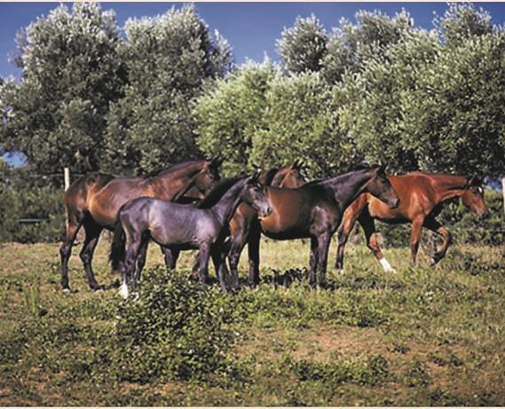 Pensione per cavalli di tutte le età